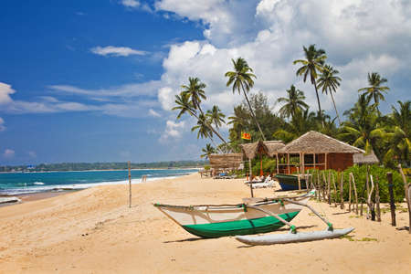 palmtrees: beaches of Sri lanka Stock Photo