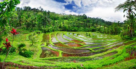 Bali , rice tereacces