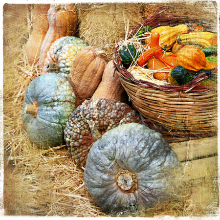 pumpkins on market - artisitic still life in retro style  photo