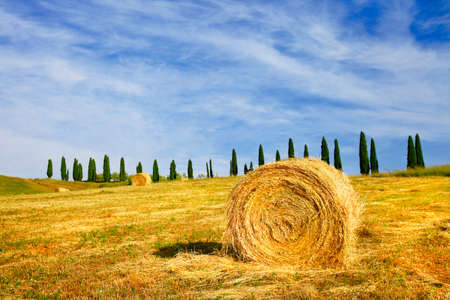 podere: classical landscape of Tuscany, Italy