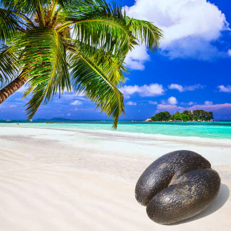 costal: Seychelles - beach with traditional Coco de mer Stock Photo