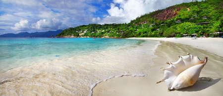 costal: tropical solitude