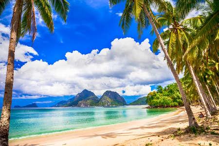 palmier: paradis tropical Banque d'images