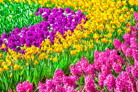 floral carpet. variety of blooming flowers in Holland photo
