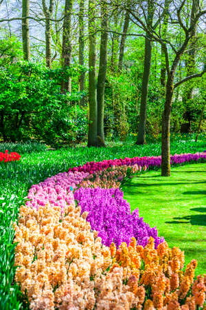 beautiful floral park in Holland. Keukenhof photo