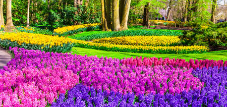 keukenhof: beautiful floral park in Holland. Keukenhof Stock Photo