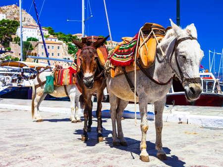 donkey: donkeys in port of Hydra, Greece