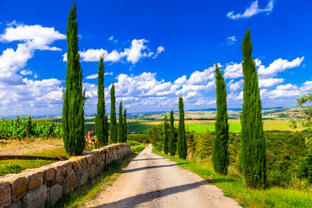 cypress tree: traditional landscapes of Tuscany