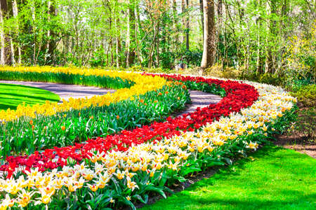 beautiful floral park Keukenhof in Holland with blooming tulips