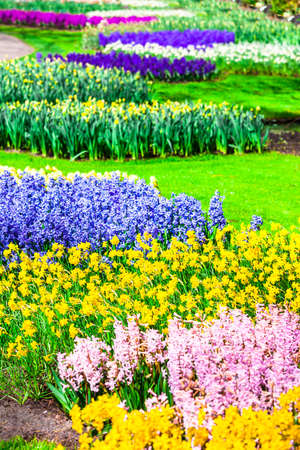 Keukenhof - famous floral park in Holland Editorial