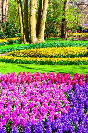 vivid: famous floral park Keukenhof in Netherlands
