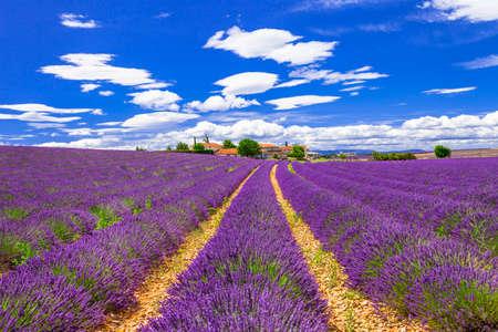 lavanda: blooming lavander in Provence Stock Photo