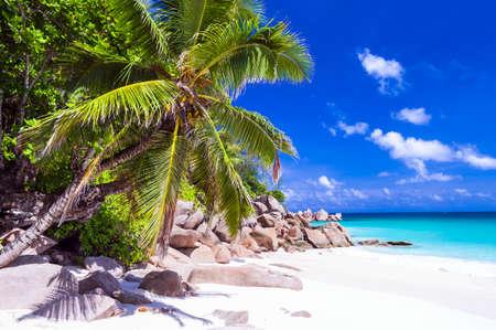 paradise beach: tropical paradise beach - Seychelles islands