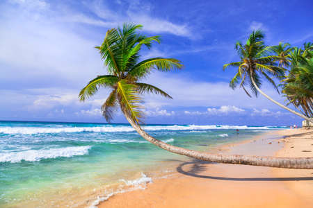 wild tropical beaches of Sri lanka with palm trees over sea Stock Photo
