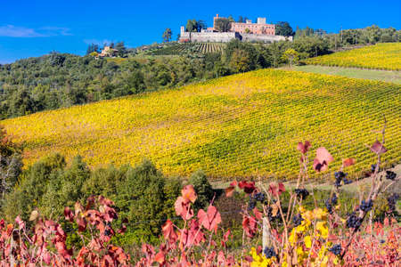 podere: pictorai countryside with vineyards in autumn. Tuscany, Chianty region, Italy