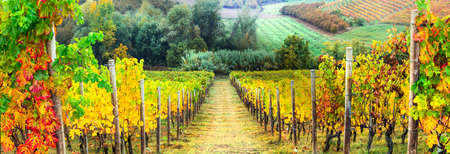 italy landscape: beautiful autumn landscape with vineyards. Tuscany, Italy