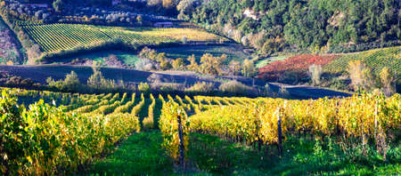 podere: scenic vineyards of Chianti in Toscana. Italy