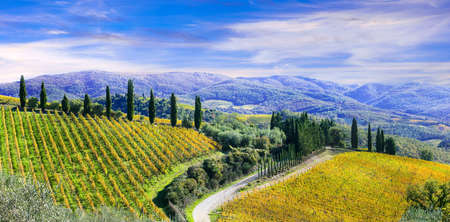 traditional Tuscany scenery. vineyards and cypress. Italy