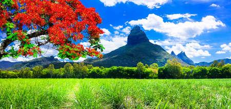 De beaux paysages de montagne de l'île Maurice avec fameux arbre rouge. Banque d'images - 67472069