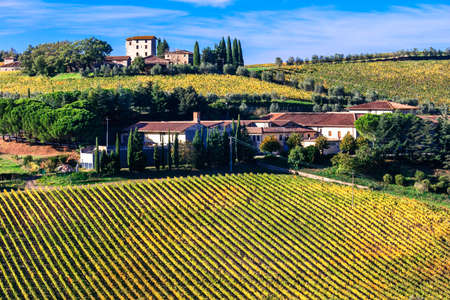 pienza: Beautiful Tuscany Countryside, Vineyards in Chianti Region, Italy.