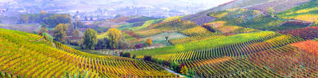 Multicolored vineyards in North Italy, Panoramic view.