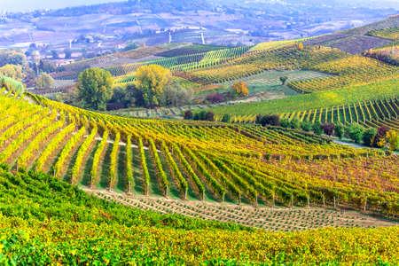 イタリア、ピエモンテのブドウ畑のパノラマ風景。
