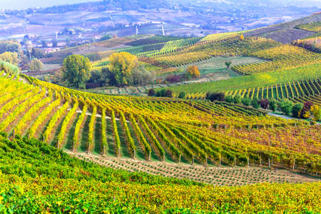 Panoramic view of vineyards of Piedmont, Italy.