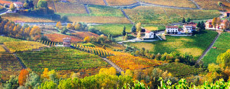 Vineyards in Piedmont region, panoramic view, Italy.
