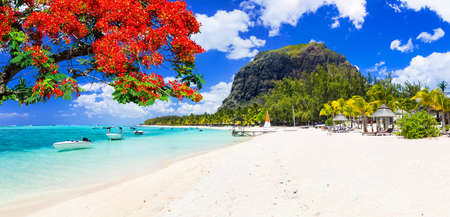 Beautiful Le Morne beach with traditional tree,Mauritius island. Stock Photo