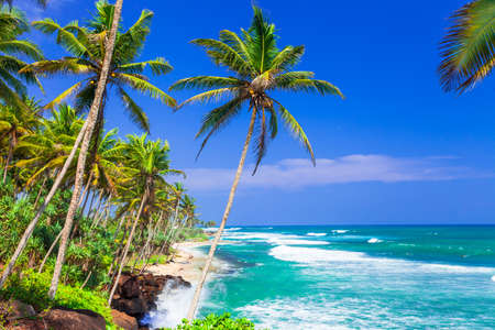 Panoramic view of Sri Lanka,sea and palm tree.