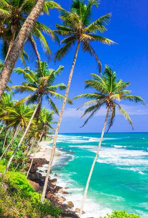 Beautiful beach in Sri Lanka,azure sea and palm tree. Stock Photo
