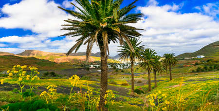 Impressive landscape in Lanzarolte island, panoramic view of palm tree and mountains, Spain. Stock Photo