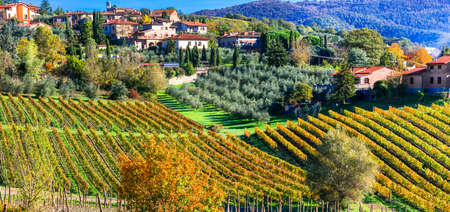 Impressive Tuscany, panoramic view of vineyards, Italy.