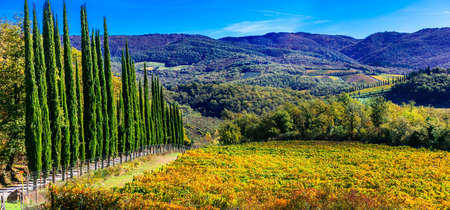 Impressive Tuscany, view with vineyards and cypresses, Italy.