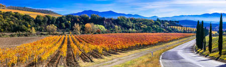 Beautiful colored fields and vineyards, Tuscany, Italy. Banque d'images