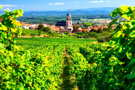 Picturesque Kayserberg village, Alsace region, view with vineyards, France.