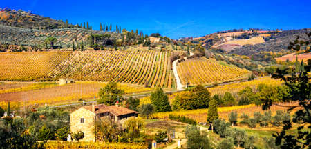 Impressive autumn landscape, view with colorful vineyards, Tuscany, Italy.