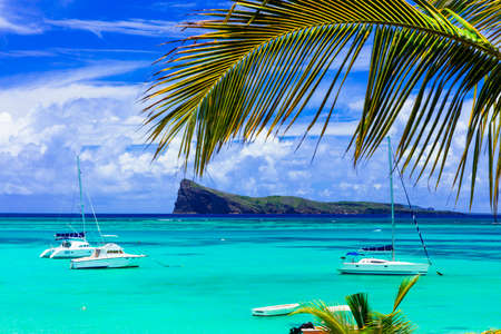 Incredible nature in Mauritius island, view with turquoise sea and palm tree.