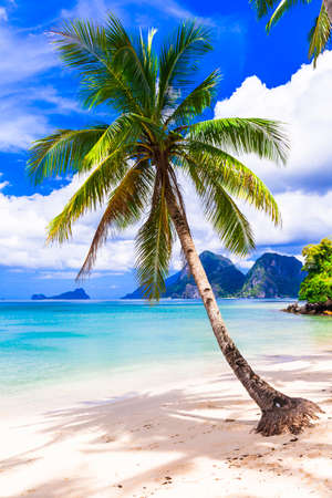 Wonderful idyllic nature scenery - tropical beach with cocnut palm trees. El Nido. Palawan island , Philippines