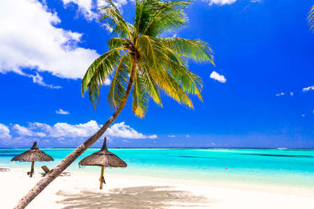 Perfect tropical beach scenery. Palm trees over turquoise sea and white sand