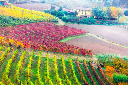 beauty in nature - autumn countryside with rows of colorful vineyards in Piedmont, famous wine region of Italy Zdjęcie Seryjne