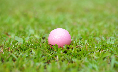 caddie: Golf crystal pink ball on green grass in golf course