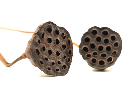 egyptian lily: Select focus lotus seeds isolated on white background Stock Photo