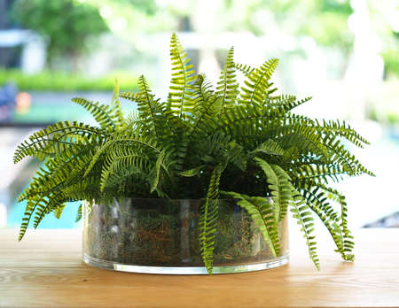frondage: Green fern leaves in the vase, nature background Stock Photo
