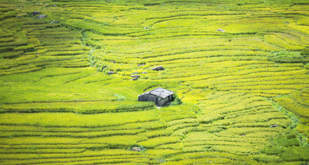 yuan yang: Terraced rice field in rice season in Sapa, Vietnam