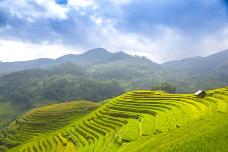 Rice fields on terraced of Mu Cang Chai, YenBai, Vietnam