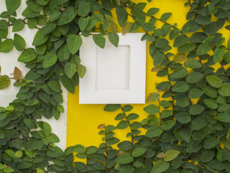 Abstract green wall with the frame on the white background of ivy gourd for background