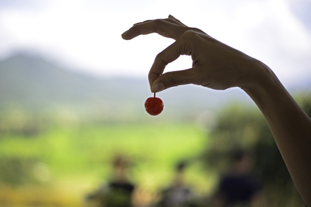 Red cherry in womans hand outdoor sweet fruit Stock Photo