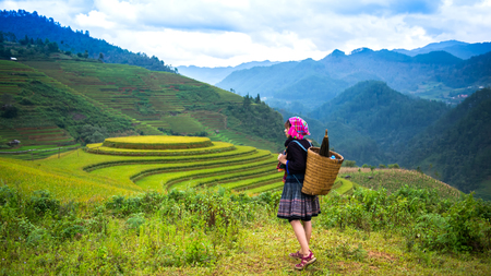Rice fields on terraced of Mu Cang Chai, YenBai, Rice fields prepare the harvest at Northwest Vietnam Stock Photo