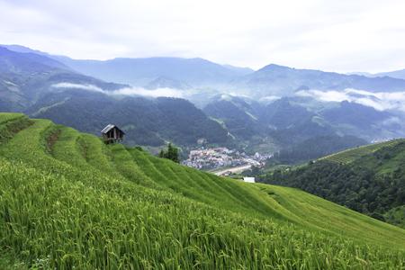 yuan yang: Terraced rice field in rice season in Vietnam